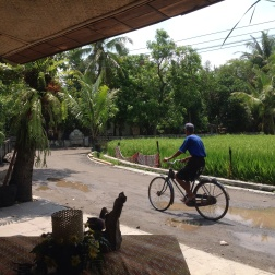Breakfast by rice fields watching village life pass