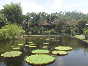 Lily pads at Tirtagangga Water Palace Gardens, Bali