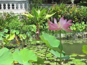 Lilies at Tirtagangga, Bali