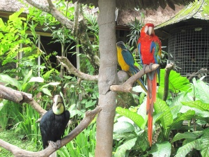 Colourful parrots and Cockatoos greeted me at the Blanco Museum.