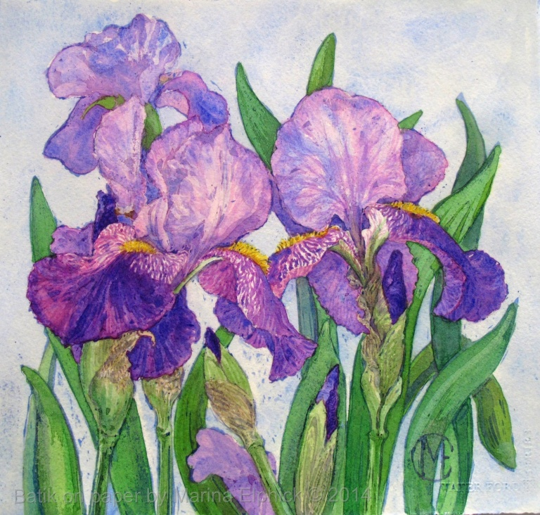 Iris , batik floral study, batik on paper by Marina Elphick, batik artist making batik art.