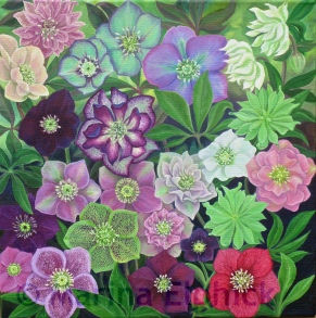 Peggy Ballard and other Hellebores, oil on canvas by Marina Elphick, painter and batik artist working in the UK
