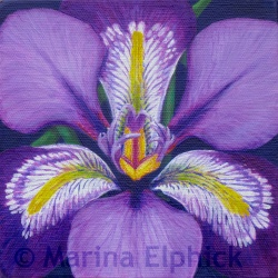 Algerian,oil on canvas by Marina Elphick, painter and batik artist working in the UK
