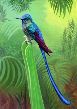 Long Tailed Sylph, oil