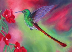 Red tailed humming bird, oil on canvas