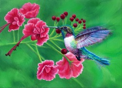 Red Throated Broad tail, oil on canvas