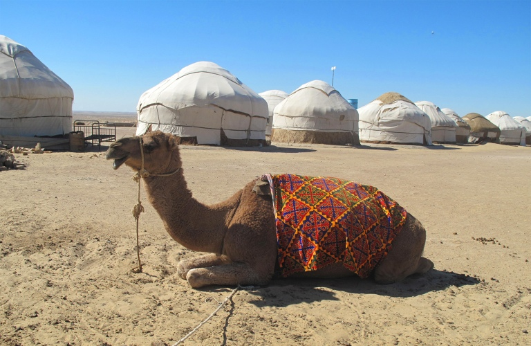 Camel at Yurt camp between Nukus and Khiva.