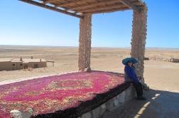A shady spot outside the yurt camp. Uzbekistan.