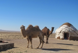 Yurt camp Camels, Uzbekistan.